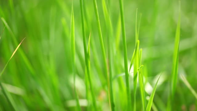 grass. - swaying stock videos & royalty-free footage