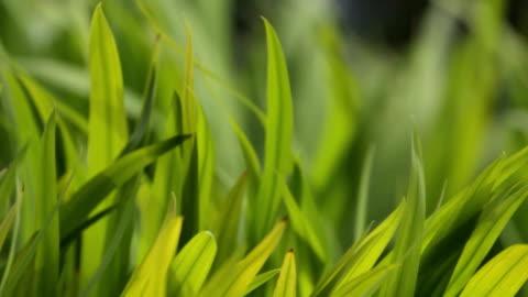 草 - grass点の映像素材/bロール