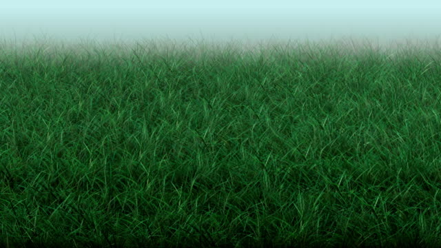 grass - hay texture stock videos & royalty-free footage