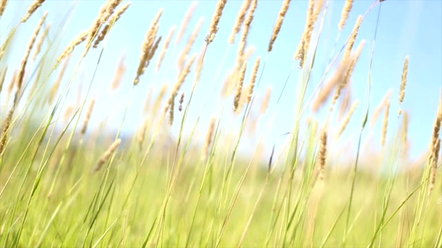 grass waving on wind - saturated color stock videos and b-roll footage