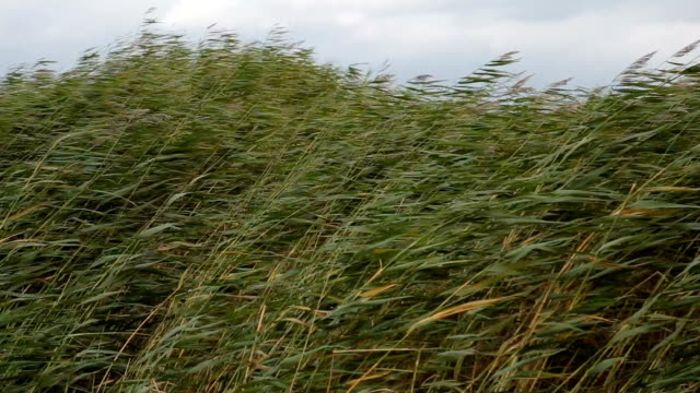 grass waving on wind - strength stock videos & royalty-free footage