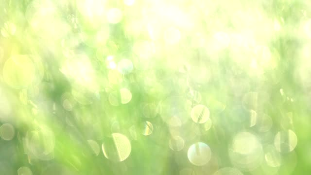 Grass with dew drops. Blurred Grass Background With Water Drops closeup. Nature. Environment concept.