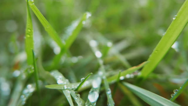 grass with dew drops. - morning dew stock videos & royalty-free footage