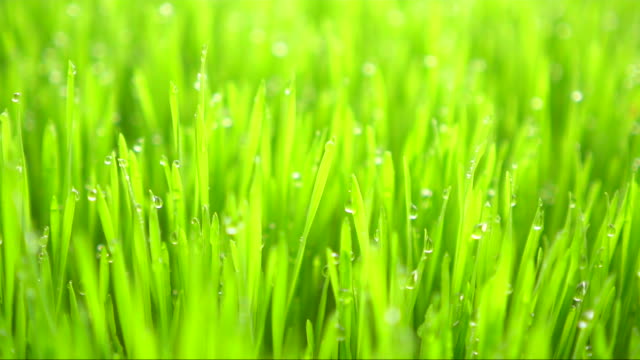 grass with dew in the morning - blade of grass stock videos & royalty-free footage