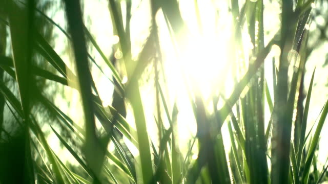 grass with sunlight