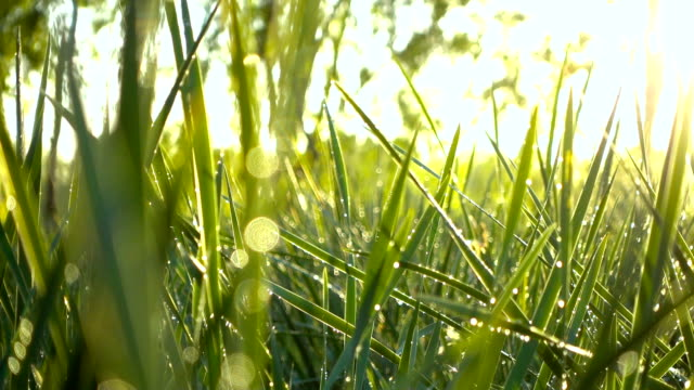 grass with sunlight - wet stock videos & royalty-free footage