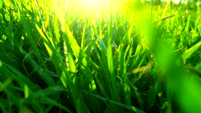 grass with sunlight - blade of grass stock videos and b-roll footage