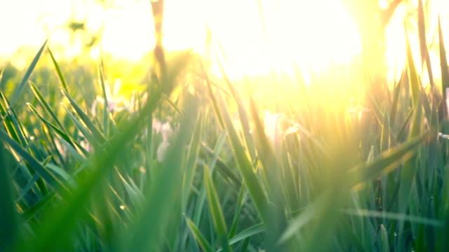 gräs med solnedgång - grodperspektiv bildbanksvideor och videomaterial från bakom kulisserna
