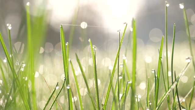 grass with water drops after night in morning - morning dew stock videos & royalty-free footage