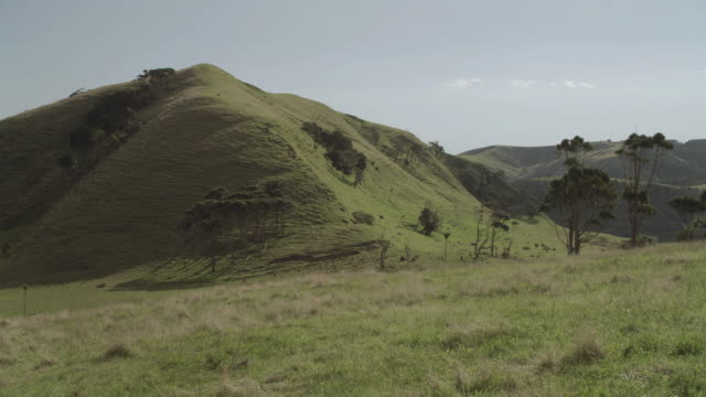 ws grass-covered irregular hillocks and scattered small trees under blue skies / hawaii, united states - なだらかな起伏のある地形点の映像素材/bロール