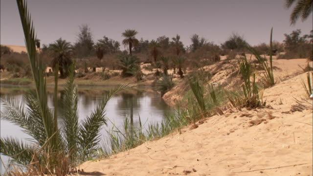 vídeos y material grabado en eventos de stock de grasses and palm fronds grow around the edge of an oasis near ubari libya. available in hd. - oasis desierto