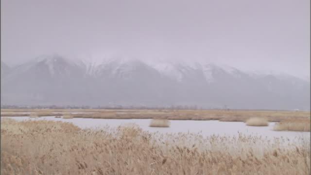 vidéos et rushes de grasses blow in the wind near a snow-capped mountain range. - prairie