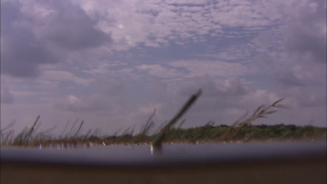 grasses grow in the everglades - everglades national park stock videos & royalty-free footage