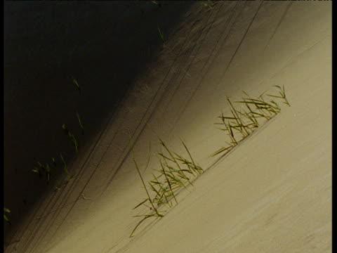grasses growing on athabasca dunes, saskatchewan - saskatchewan stock videos and b-roll footage