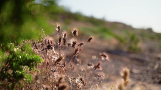 早春のアリゾナ砂漠の草。背景には、前の草から茂みにゆっくりと焦点を合わせたビデオがあります。 - ネバダ州クラーク郡点の映像素材/bロール