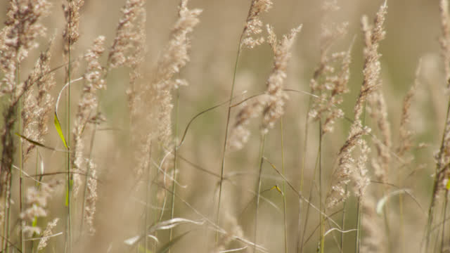 grasses sway in breeze, alaska. - chugach national forest stock videos & royalty-free footage