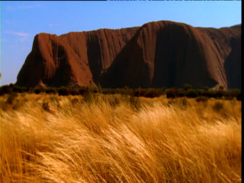 grasses sway in front of red sandstone of uluru in outback, northern territory, australia - sandstone stock videos & royalty-free footage