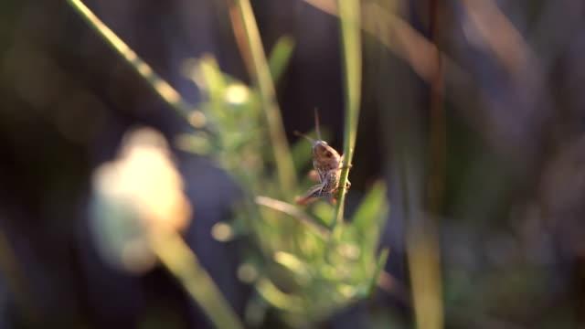 Sauterelle dans la nature sauvage