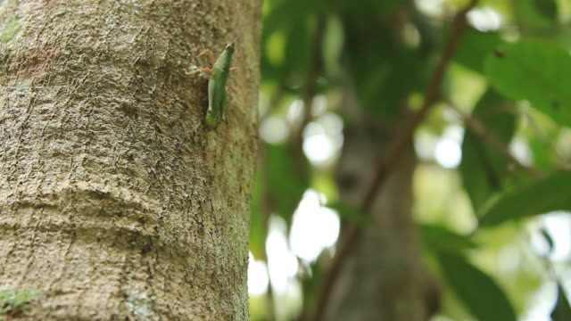 Grasshopper on the tree