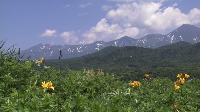 Grassland in early Summer in Hokkaido