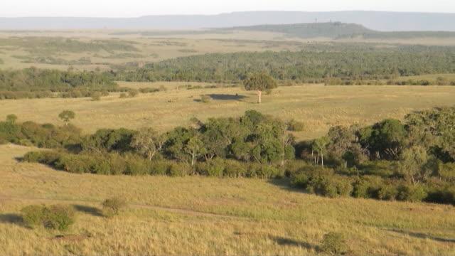 vídeos de stock, filmes e b-roll de ws pov aerial grassland of massai mara national park audio / masai mara, rift valley, kenya - reserva animal