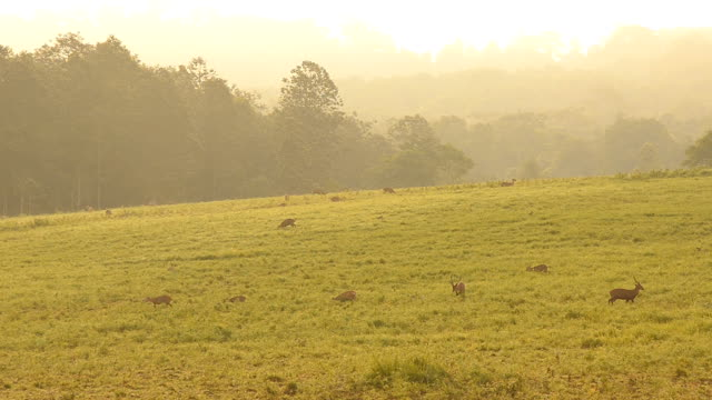 grassland reserve in morning - deer family stock videos and b-roll footage