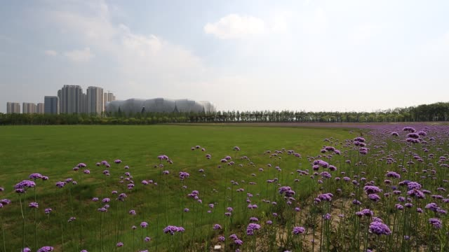 grassland with verbena against hangzhou olympic sports center,hangzhou - world's fair stock videos and b-roll footage