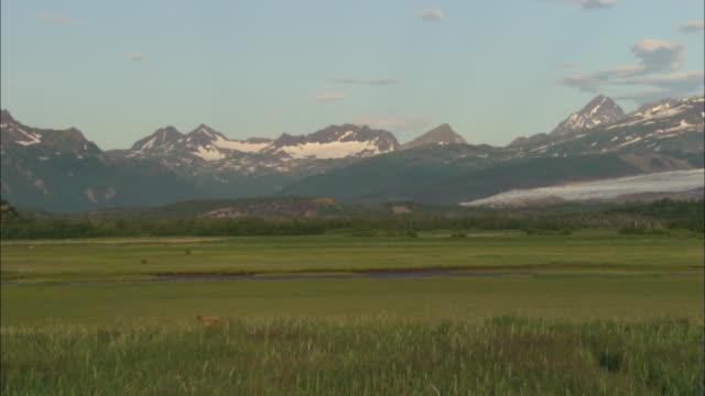 ws, grassy field and snow capped mountains, katmai national park, alaska, usa - アラスカ点の映像素材/bロール