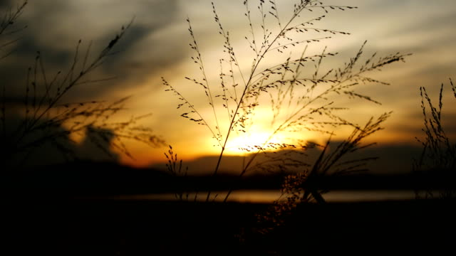 grassy leaves swaying in the wind sunset background - swaying stock videos & royalty-free footage