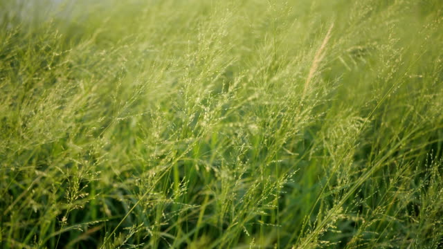 grassy leaves swaying in the wind - swaying stock videos & royalty-free footage