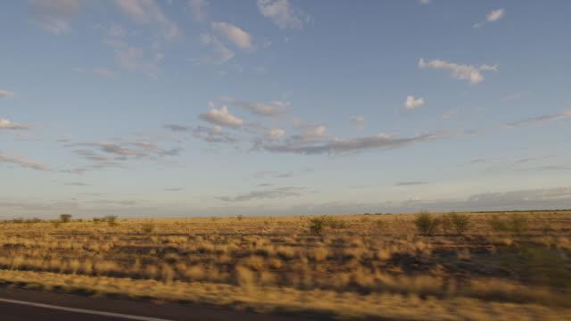 a grassy plain shot - baumgruppe stock-videos und b-roll-filmmaterial
