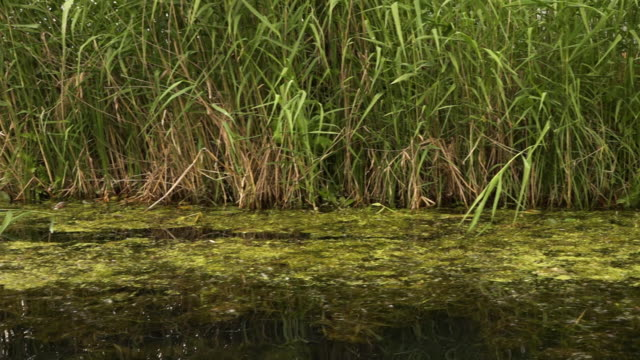 a grassy riverbank passing by above still water - copse stock videos and b-roll footage