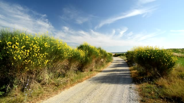gravel road with gorse bush in summer, pienza, val d'orcia, siena province, tuscany, italy - dirt track stock videos and b-roll footage