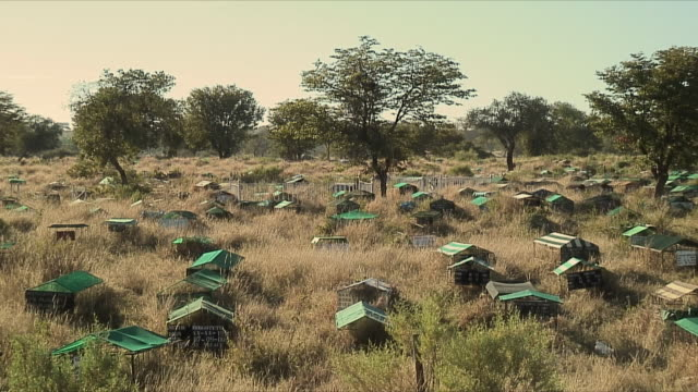 ws graves with covered coffins / okavango delta, botswana - beehive stock videos & royalty-free footage