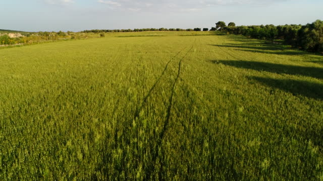 gravine in puglia countryside, italy - wheat stock videos & royalty-free footage