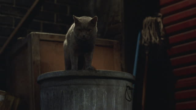 a gray cat sitting on a garbage in an alley jumps down. - alley stock videos & royalty-free footage