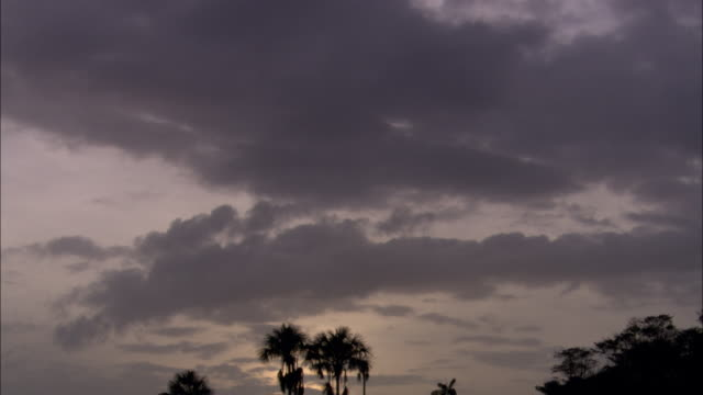 gray clouds drift over a tropical landscape at sunset. - french guiana stock videos & royalty-free footage