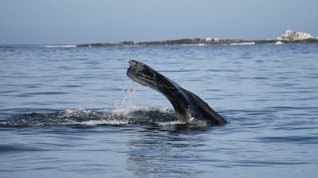 gray whales - cetacea stock videos & royalty-free footage