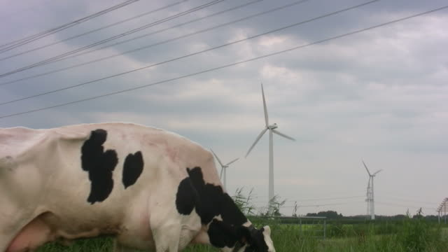 grazing cattle in front of wind turbine - cattle stock videos & royalty-free footage