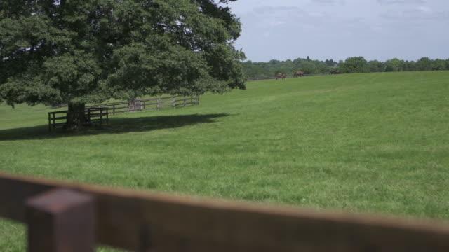a grazing field - kleine gruppe von tieren stock-videos und b-roll-filmmaterial