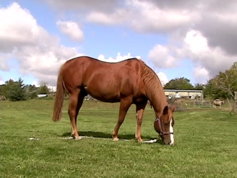 grazing horse - hooved animal stock videos & royalty-free footage