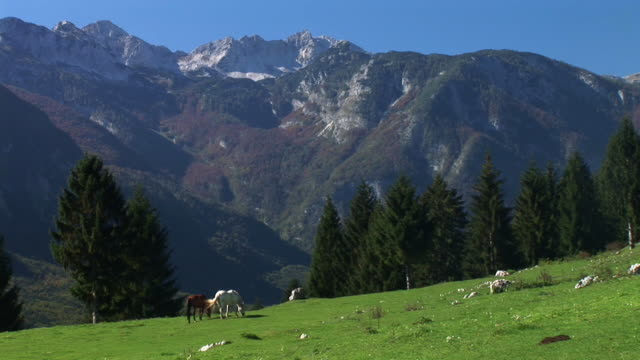 hd: pferde grasen - alm stock-videos und b-roll-filmmaterial