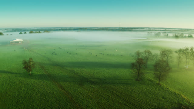 grazing land crisscrossed with tracks on misty morning - cattle stock videos & royalty-free footage