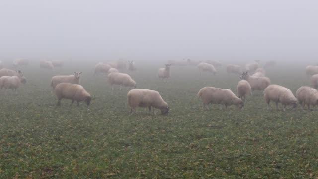 grazing - pascolare video stock e b–roll