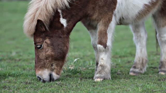 Pastar joven caballo