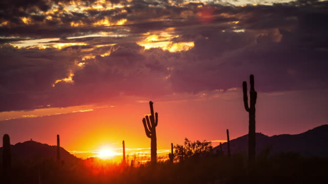 great american desert at dusk - time lapse - cactus video stock e b–roll