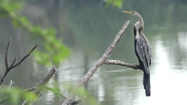 great blue heron - heron stock videos & royalty-free footage