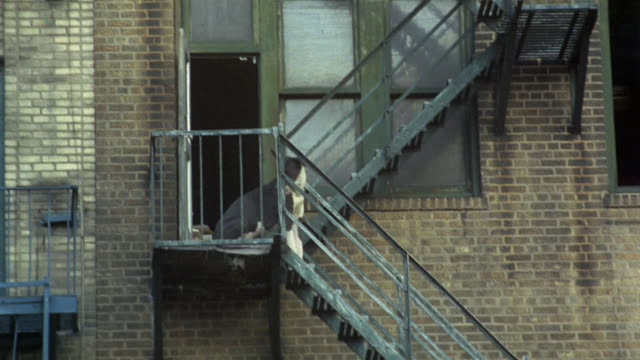 1969 ws great dane sitting on fire escape, new york city, new york, usa - sitting video stock e b–roll