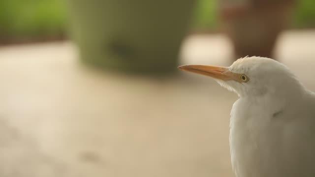vídeos de stock, filmes e b-roll de garça-branca-grande pássaro - great egret