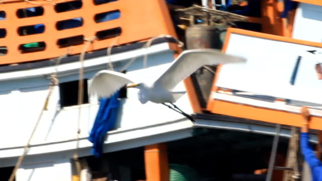 vídeos y material grabado en eventos de stock de garceta grande flying travelling - cuello de animal